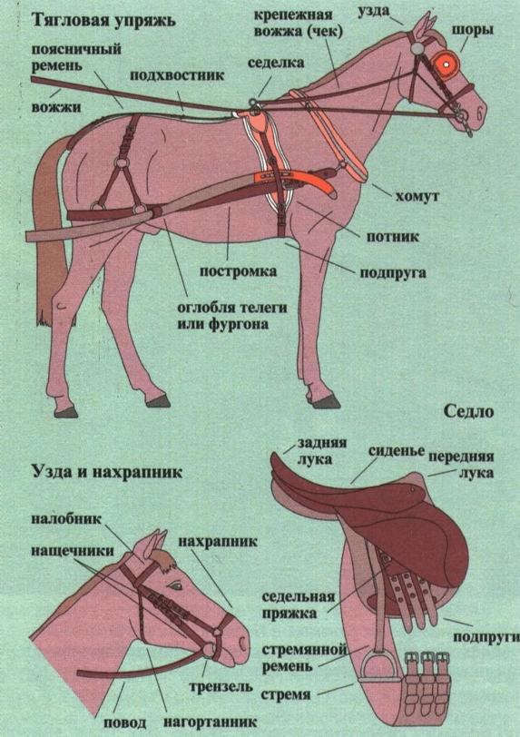 Настоящая инфографика - строение лошадиной сбруи